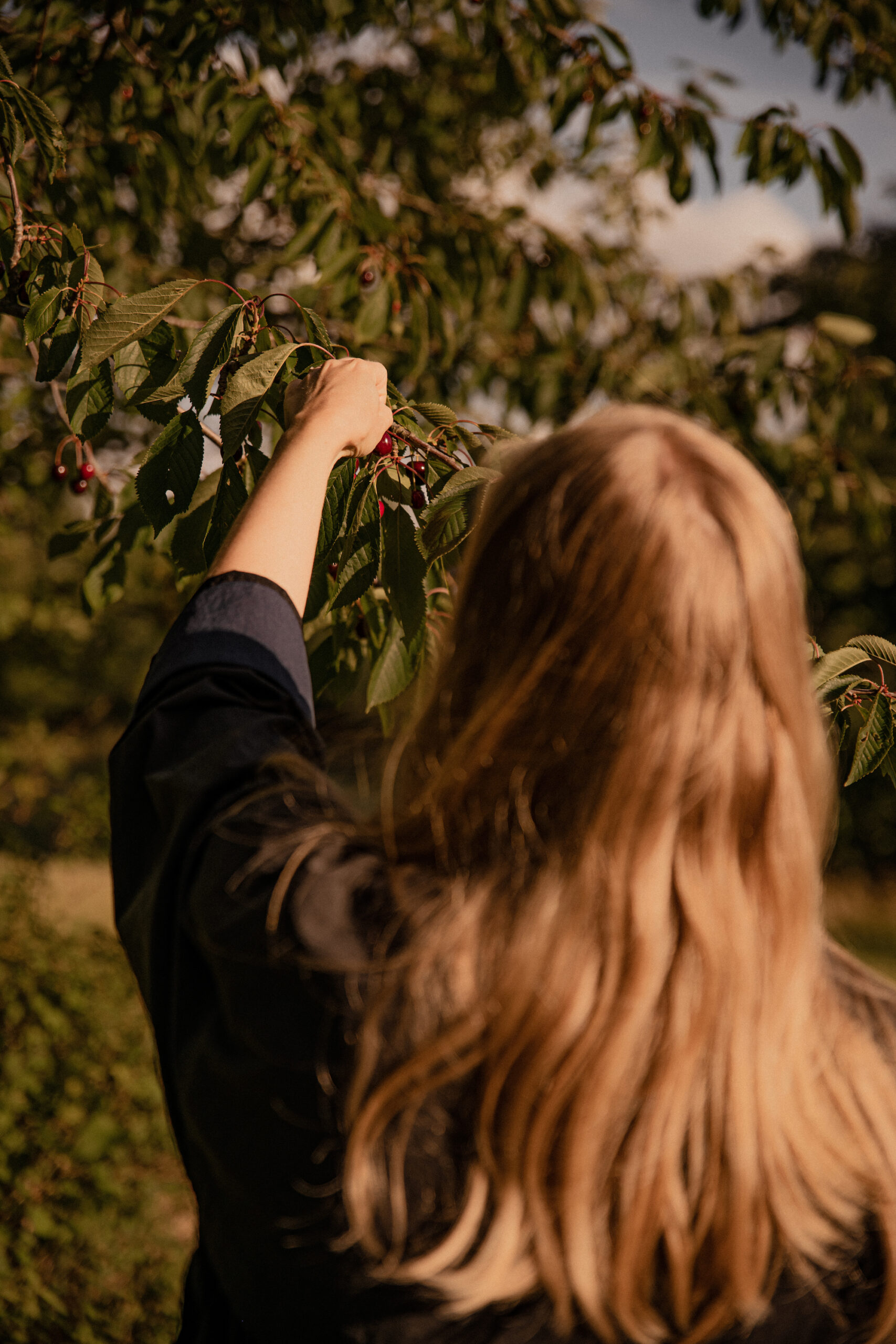 picking cherries for an cherry picking editorial about fashion